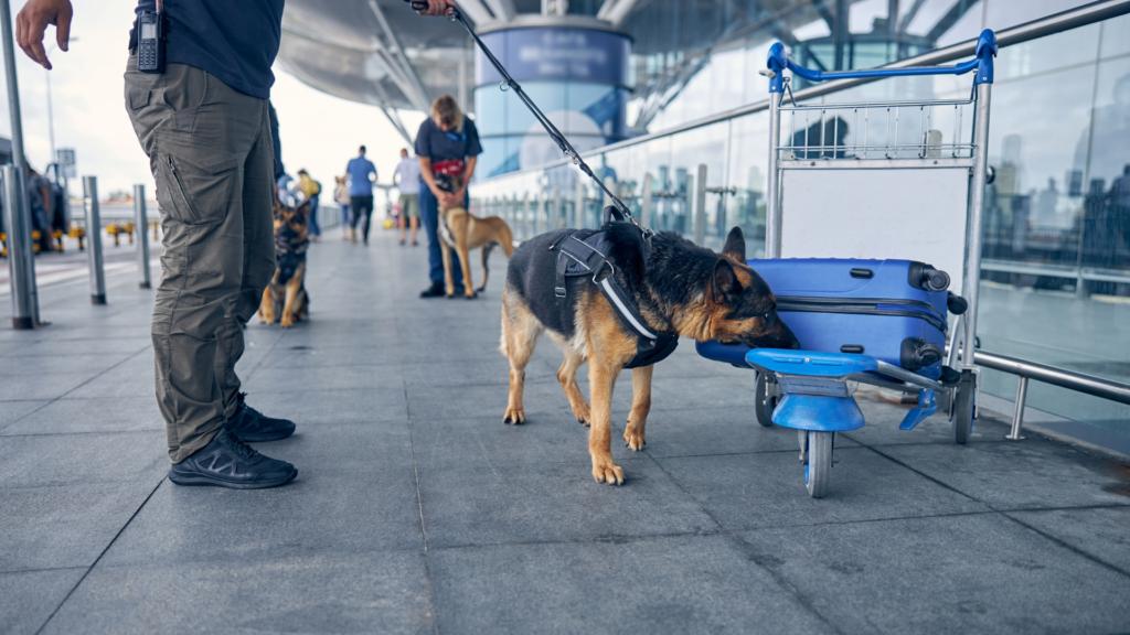 Dog-Handling Services SecurePro